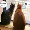 ハトが来た!猫が鳥を見て「ケケケ」と鳴くのは何故?どうする?【おすすめ】ハトよけ対策 ハトよけグッズ