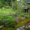 庭園35 建仁寺塔頭両足院 半夏生が彩る池泉回遊式庭園