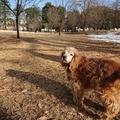冬の終わりに、狭山公園散歩に出かける