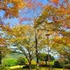 公園 (木々編) ②