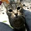 糖尿病の猫にインスリン投与中、食欲が戻ってきて一安心です。