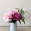 シャクヤクの花の咲き時