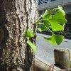 4月 天宮光啓先生 東京 瞑想会 法話会 四国遍路