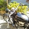 #バイク屋の日常 #W650 #ハンドル交換 #カスタム #クラッシック