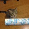 猫にコロコロローラーをかけてみた。
