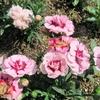 花鳥風月&埋もれた名曲を探す旅(26)~ゲイリー・ムーア(Gary Moore)歌唱曲5選~