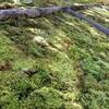 数種類の苔 と 苔玉の展示も 〜広島市植物公園〜