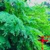 緑の宮・ヤマトタケルの足跡を追って『愛知・内々神社』