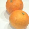 柑橘類の黒点病斑について