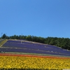 絶景!花のじゅうたん 富良野 ファーム富田・北星山ラベンダー園を巡る
