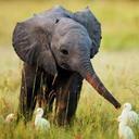 ゾウがまりもに恋する日。