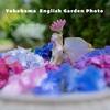 紫陽花に恋する。24mmで撮影する横浜イングリッシュガーデン