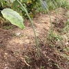刈った草の利用