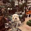 ホームセンター大型犬ペットカート対決