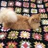編み物とピンクッション