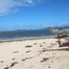 世界遺産グレートバリアリーフに浮かぶ、グリーン島観光!!