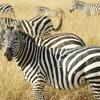ケニア最大級の国立保護区!ビッグ5全部を制覇できるマサイ・マラ国立保護区を紹介!