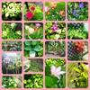 4月『つる植物の園 管理カレンダー』
