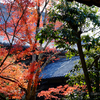 晩秋の嵐山②清凉寺(嵯峨釈迦堂)と二尊院