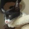 今日の黒猫モモ&白黒猫ナナの動画ー501
