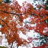いざ、紅葉の高野山 ~旅フォト日記~