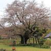 平成最後のお花見へ 尾所の山桜