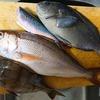 【新魚種Get回!】8月1日(日)釣行記 潮岬沖