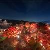 京都・東山 - 青蓮院 青龍殿の紅葉