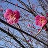 立春の風景