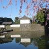 東京大手町『大手門の白壁に映える枝垂れ桜』