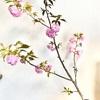 【ライフ】おうちで八重桜
