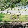 庭と 台所と、川べりの風景