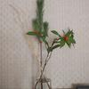 枝ものを飾る:1月