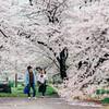 お気に入りの桜をEマウントレンズで撮る~名城公園編~