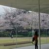 金沢の桜は満開「金沢21世紀美術館」