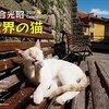 里親が決まって閉店したサンフランシスコの猫カフェはいい話なのか、ホームズの立場