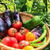 夏に知っておきたい野菜の鮮度を長持ちさせる方法 トマト編