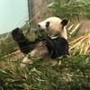 子連れに優しい上野動物園