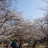 桜について