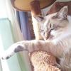 我が家の猫のネムネム