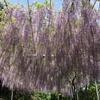 足利の織姫神社へ