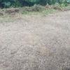 【農園】kinjo2040畑作りを始める! 隣地の草ボーボーを草刈り草刈り