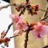 早春の陽に輝く花