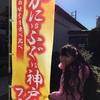 くら寿司♪かに!フグ!神戸牛フェア♪