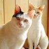 猫の日に贈る「にゃんにゃんにゃん(222)」なネコ写真。