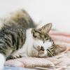 睡眠の質を高めてくれるマットレスはこれだ!!科学的に寝具と睡眠の質との関係が証明されたぞという話。