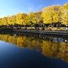 【後編】2019年秋に再訪、昭和記念公園