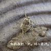 フユシャク♀が産んだ卵 その後
