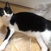 ★529鐘目『愛猫・レフくんが、W杯史上初の快挙を当ててしまったでしょうの巻』【エムPのイケてる大人計画】