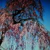 3月19日誕生日の花と花言葉歌句